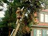 Fällen von Bäumen, bedandbreakfast-leer